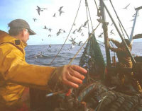 New ISO Standard on Traceability of Fish Products to Improve Food Safety
