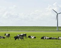 FrieslandCampina and Unilever Commence Sustainable Dairy Ingredients Project