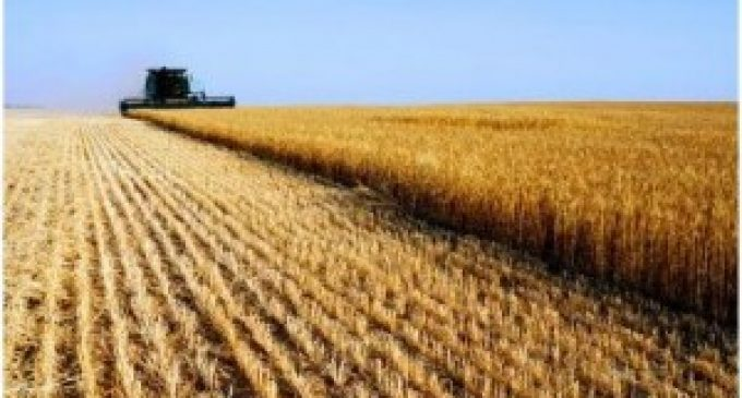 World Grain Production Down But Recovering