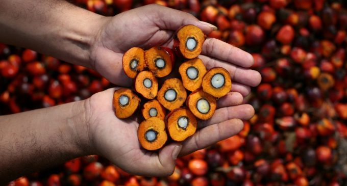 Encouraging Greater Use of Sustainable Palm Oil