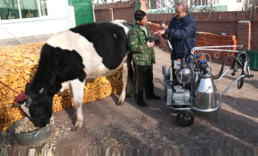 Nestle Supports Global Dairy Industry With New Partnership in Morocco