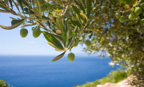 Price Rises and Private Label Drive Up Sales of Olive Oil Across Europe