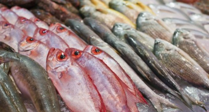 Seafood Consumption Reduces Risk of Death From Heart Disease