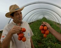 Unilever Sources Over 33% of Agricultural Raw Materials Sustainably