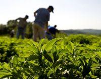 Stevia Sweetens Up Europe