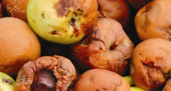 Co-op to divert all food store waste from landfill