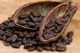 Ecuadorian cocoa wins vote of ADM and Cargill R&D chiefs