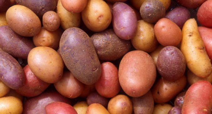 Potatoes offer nutritional value for money, say researchers