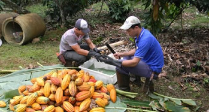 Cargill Cocoa Promise Helps First Brazilian Cocoa Farmers to Become UTZ Certified