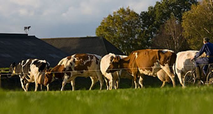 €700 Million Investment in Dairy Processing in The Netherlands