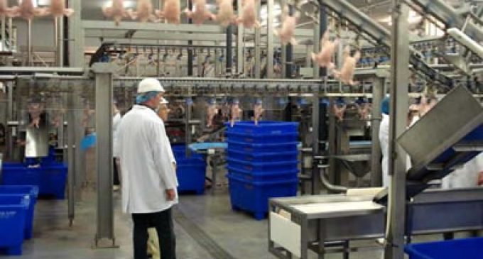 Outlook For Global Poultry Industry Starting to Improve