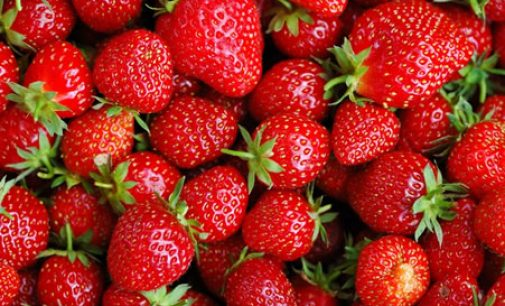 New Research Confirms Importance of Ethylene Removal in Extending Strawberry Product Life