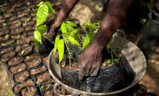 Mondelez International Strengthens Efforts to Address Child Labour in Cocoa Production