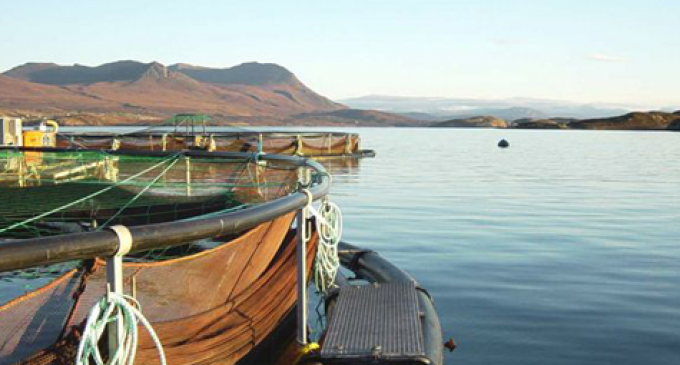 Scottish Aquaculture Website Launched