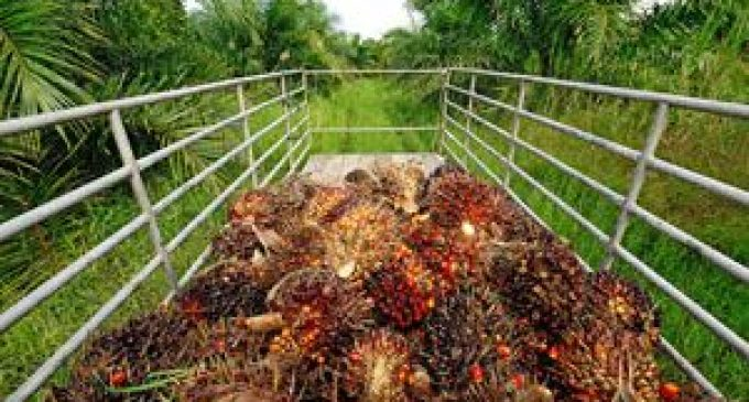 Unilever to source all palm oil from traceable sources by 2014