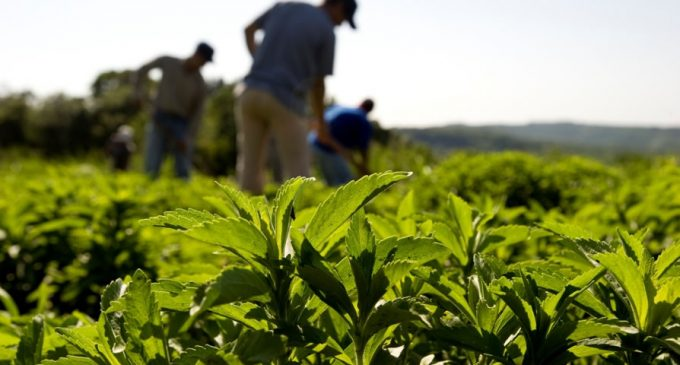 Cargill Introduces Next-Generation of Stevia-based Sweeteners