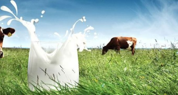 Milk Provides More Nutrition For Less Emissions