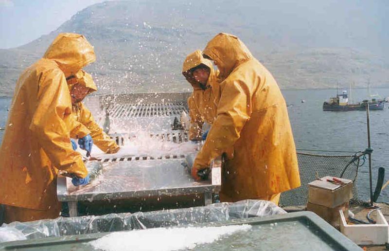 241 млн. евро выделят на развитие ирландского сектора морепродуктов