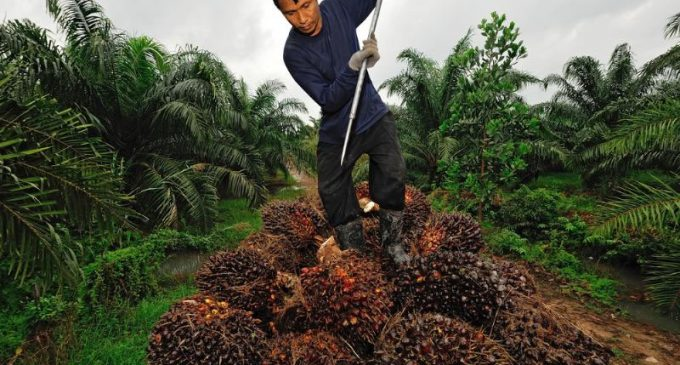 The Roundtable on Sustainable Palm Oil Has Published its 2016 Impact Report