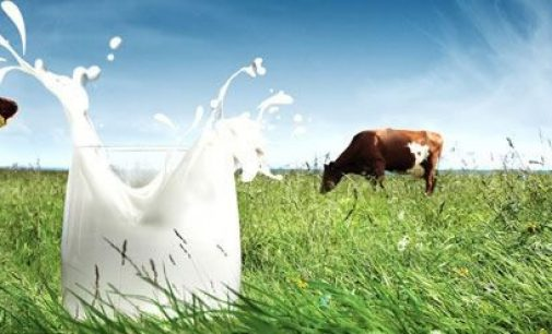 One in Four British Dairy Farmers to Benefit From £31 Million Arla Windfall