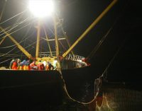Positive Economic Trends For EU Fishing Fleet