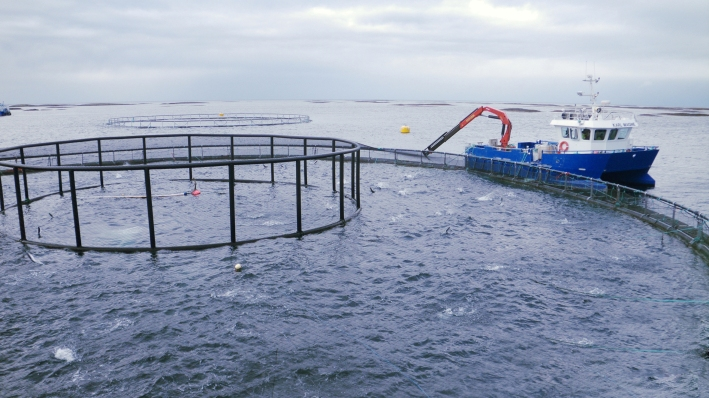 EU Research Helps Fish Farmers Become More Competitive