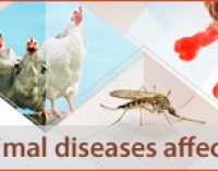 Campylobacteriosis Cases Stable, Listeriosis Cases Continue to Rise