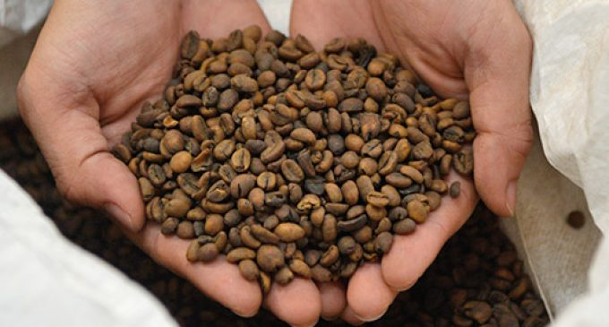 Nestlé Invests SFr80 Million in Factory For Decaffeinated Coffee Beans