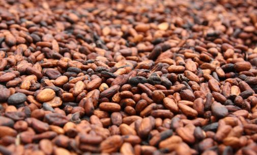 Cocoa prices to stay high on production shortfall, traders say