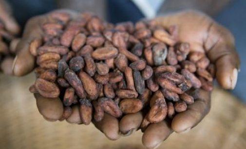 Premium Payments Continue to Improve Livelihoods in Cocoa Communities