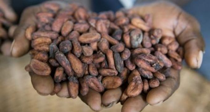 Cargill Enhances Traceability For Premium Payments to Cocoa Farmers – €14 Million Paid in 2015