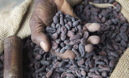 Nestlé Becomes First Major UK Confectionery Company to Source 100% Sustainable Cocoa