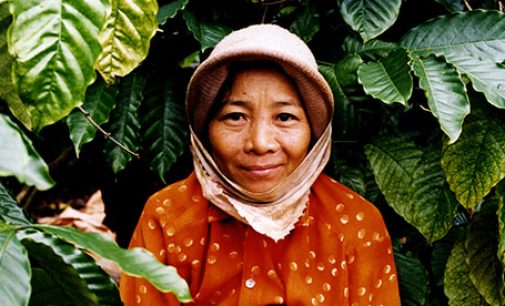 Rainy Days and Milk Cans – Saving Water in Vietnam's Coffee Fields