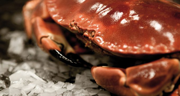 Clearwater Seafoods to Acquire Macduff Shellfish Group