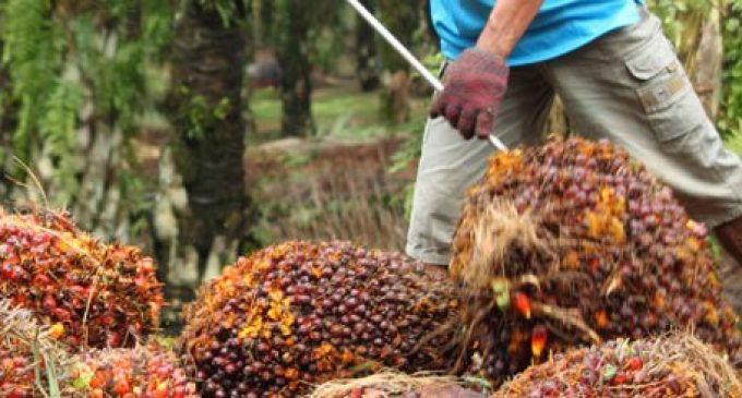 IOI Loders Croklaan Achieves 100 Percent Traceability for Its Directly-Sourced Palm Oil