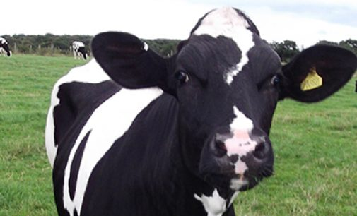 Tesco Invests in the Future For Britain's Dairy Farmers