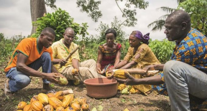 Cargill Cocoa Promise Report – How Livelihoods For Cocoa Farmers and Their Communities are Improving