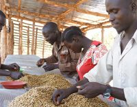 USAID Joins Nespresso and TechnoServe in Supporting South Sudan's Coffee Farmers