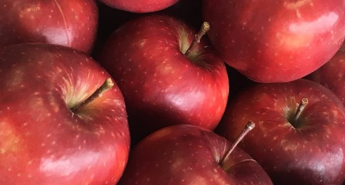 New Apple Variety to Revolutionise English Apple Season