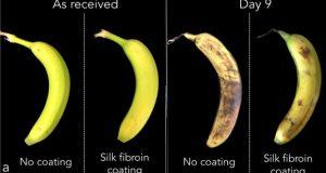 study_bananas