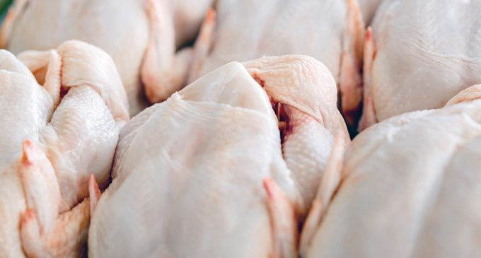 Cherkizovo Group to Export Poultry Products to Iraq