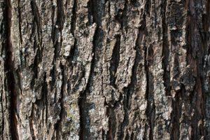 bisabolol-wood