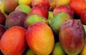 mangoes-1466878059