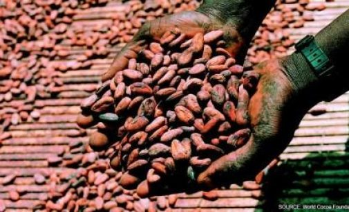 Global Cocoa Production to Hit a Record 4.85 Million Tonnes in 2019