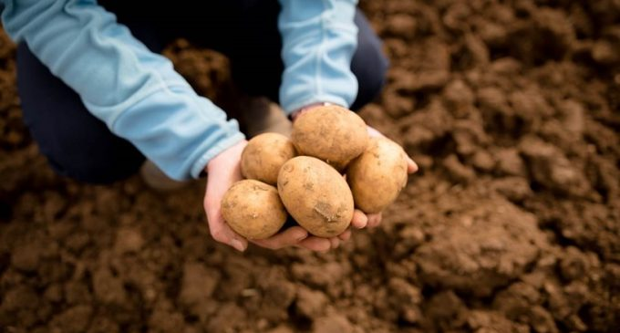 Tesco Investing in the Future For Britain's Potato Growers