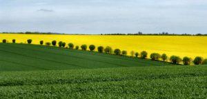 agricilture poland