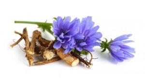chicory-root-flower-900x508