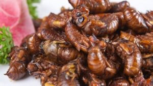 edible-insects-no-special-risks-for-humans_strict_xxl