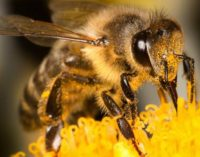 Actions to Stop the Decline of Pollinating Insects