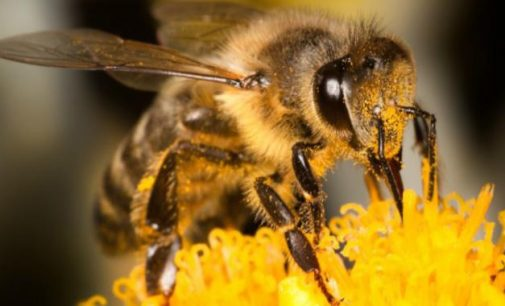 Public Consultation on Actions to Halt the Decline of Bees and Other Pollinators